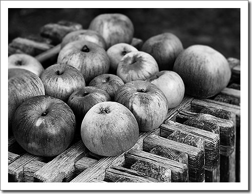 Apples in Black-and-White