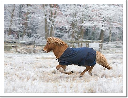 Trotting Pony