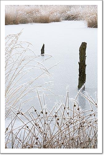 Frozen Marshland