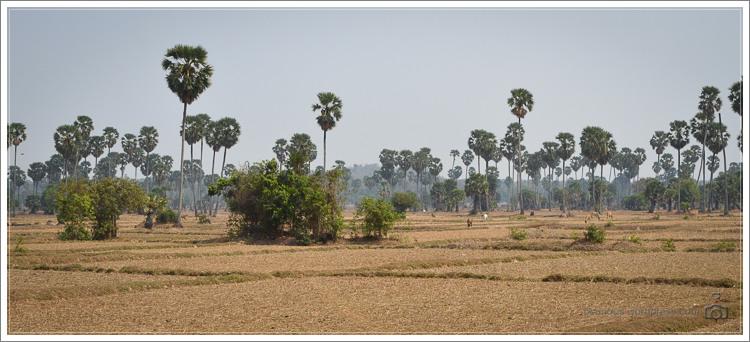 20130314-Kambodscha-8127