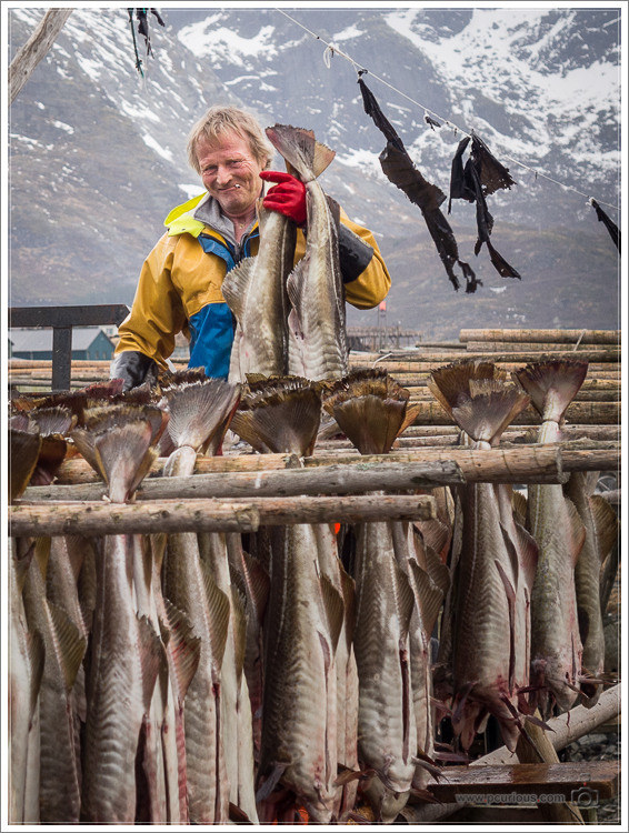 Hanging Cod for Drying