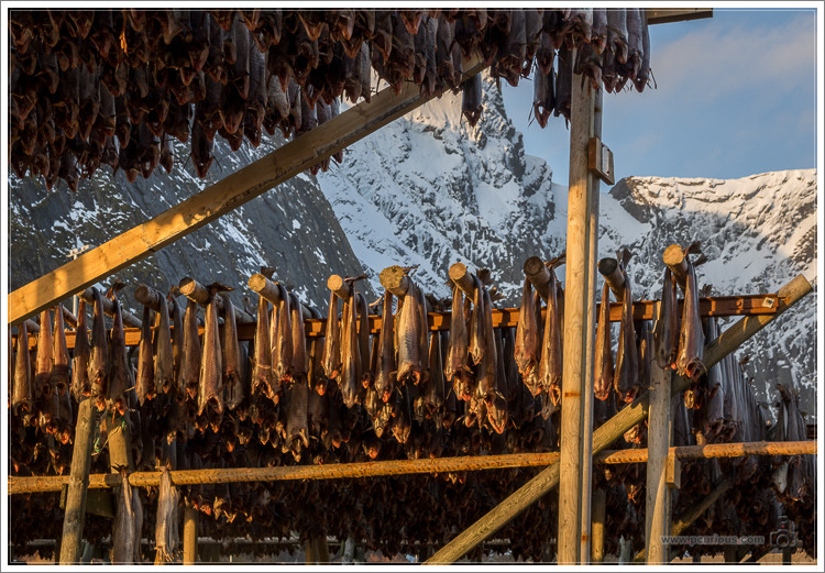 Cod Drying