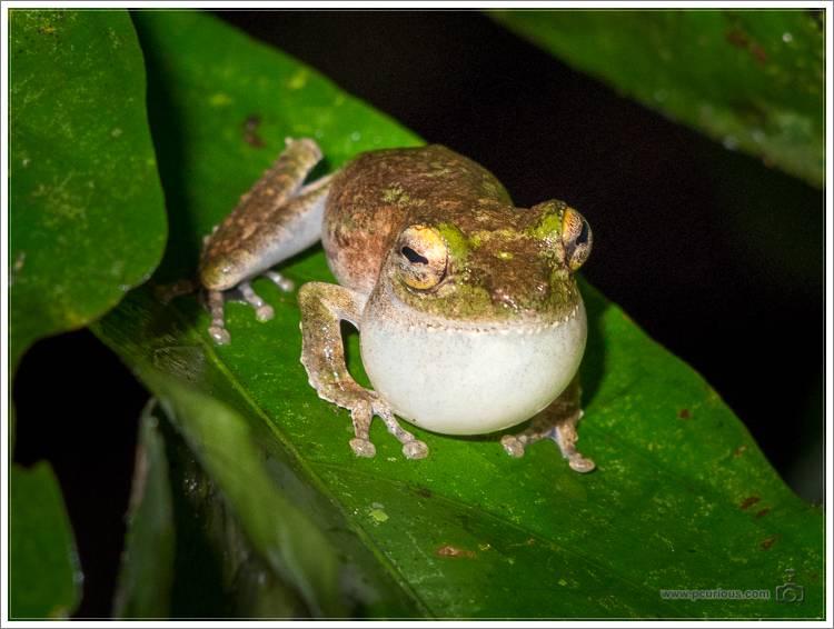 20140810-Borneo-8104311